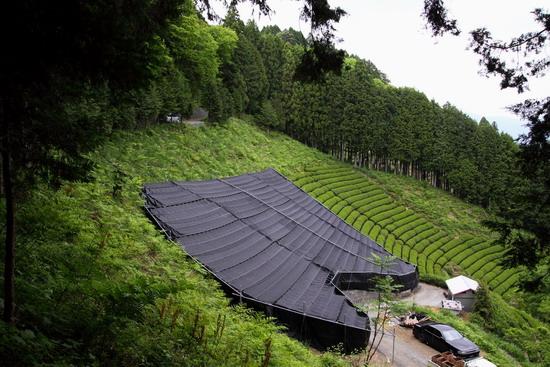 gyokuro garden