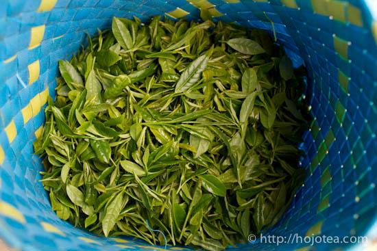 black tea-5