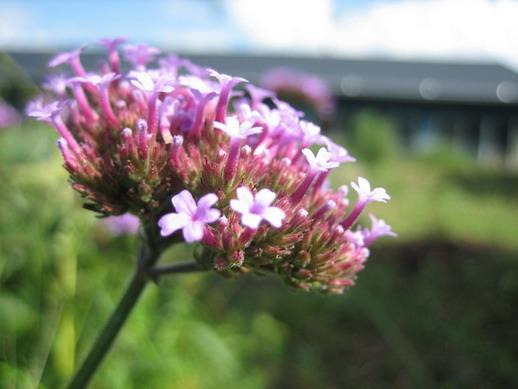 Flower_02_resize.jpg