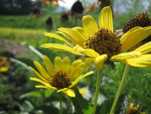 Flower_03_resize.jpg