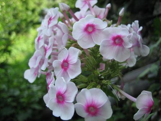 Flower_05_resize.jpg