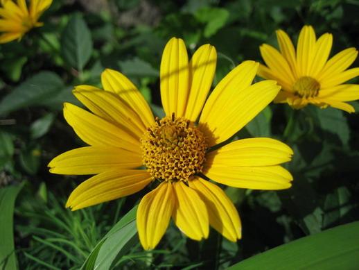 Flower_09_resize.jpg
