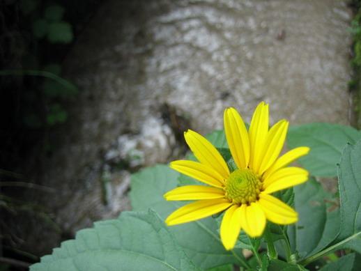 Flower_14_resize.jpg