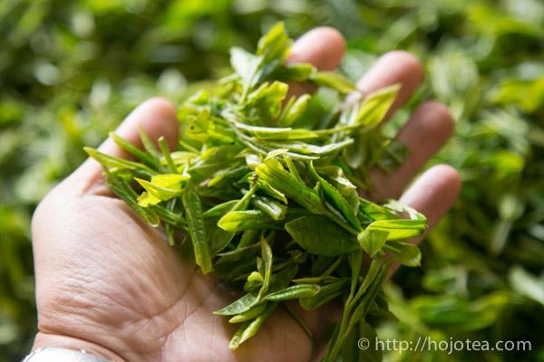 白牡丹用の茶葉
