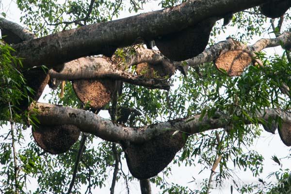 The wild bee nest