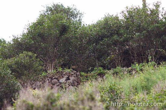老木の周りに生い茂る雑草