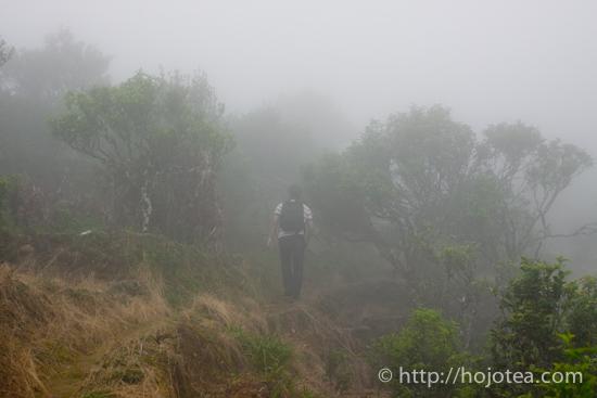 霧に包まれた鳳凰単叢の茶園