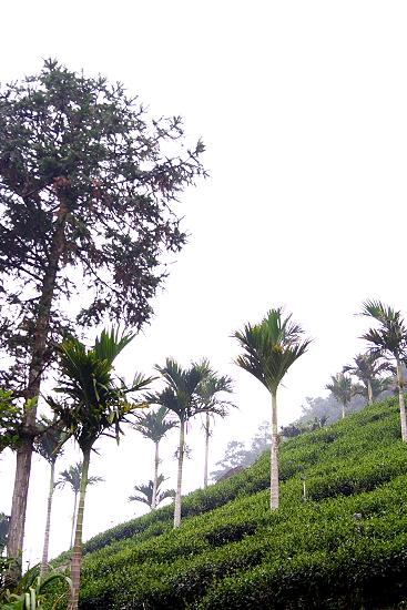 Taiwan9.jpg