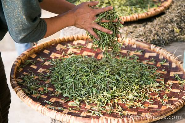 pu-erh tea rolling process