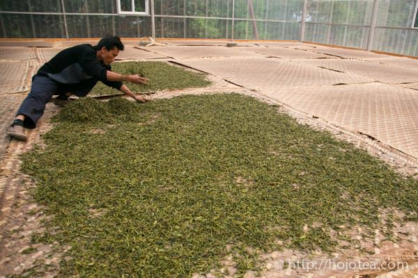 Sun Shine Drying of Pu-erh tea