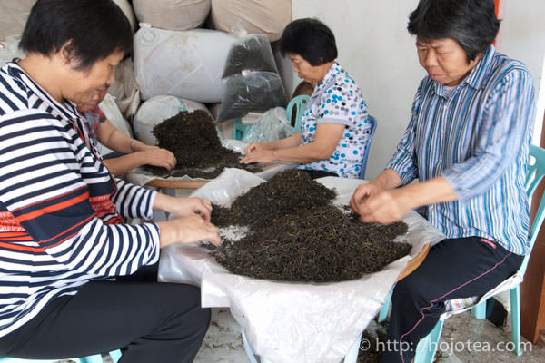 hand sorting of phoenix oolong mao-cha