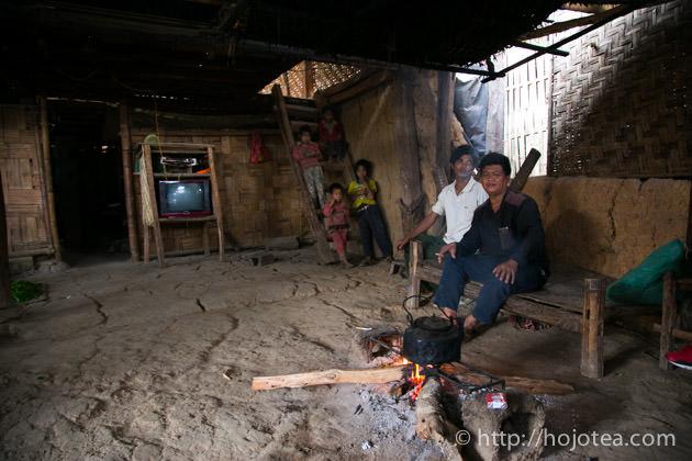 ミャンマーとの国境違いに自生するプーアル茶