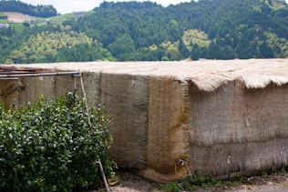 朝比奈玉露の茶園