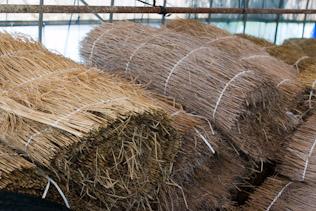 朝比奈玉露被覆用の藁
