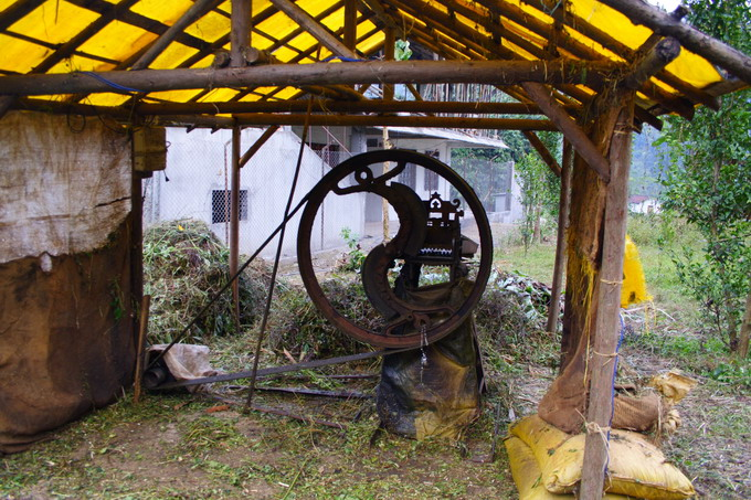 Chopping machine for natural herbs: After being chopped, herbs are sent to the water bath for further decomposition and extraction.