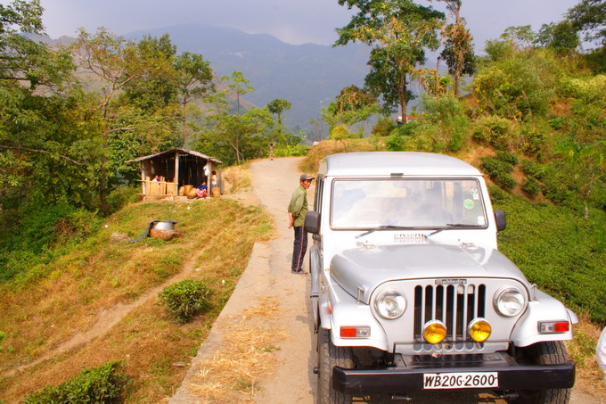 The road condition is very bad and therefore 4WD is usually used for moving around the garden when we visited Darjeeling