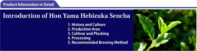 Introduction of Shizuoka Sencha
