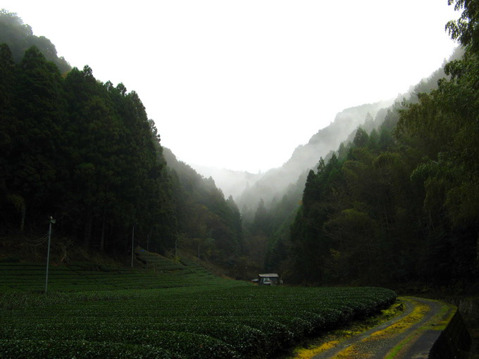 The tea garden of Hon Yama tea is cultivated along the natural alpine river. The fog produced by the river creates a very ideal quality of tea leaves.