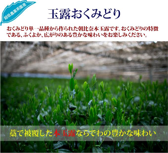 日本茶(緑茶)玉露おくみどり