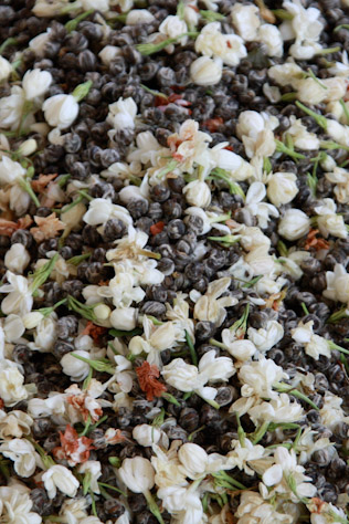 ジャスミンと茶葉の混合作業