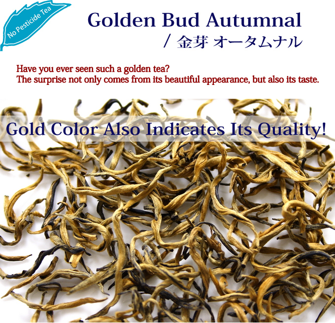 Have you ever seen such a golden tea? The surprise not only comes from its beautiful appearance, but also its taste./ Golden Bud Autumnal