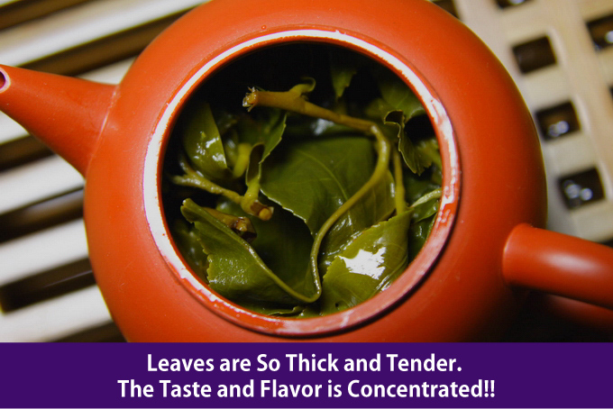 Leaves are So Thick and Tender. The Taste and Flavor is Concentrated!!