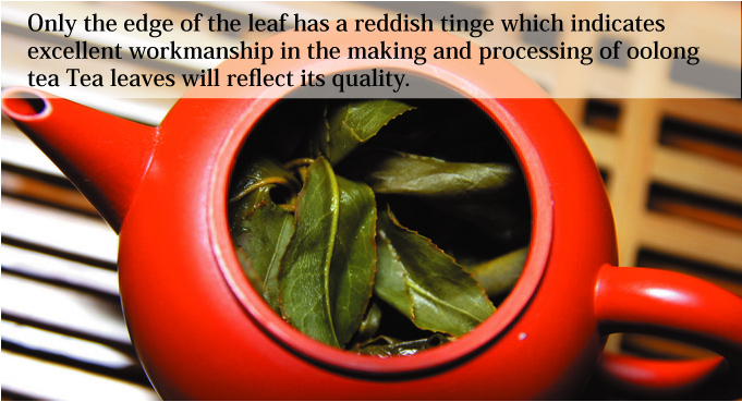 Only the edge of the leaf has a reddish tinge which indicates excellent workmanship in the making and processing of oolong tea Tea leaves will reflect its quality.