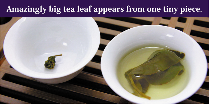 Amazingly big tea leaf appears from one tiny piece