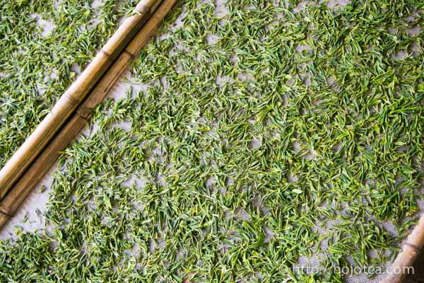 ジャスミンのベース緑茶
