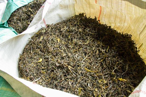 プーアル茶の毛茶