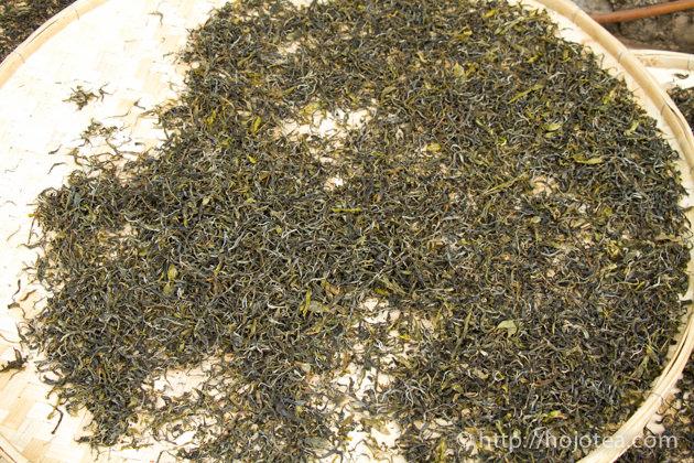 プーアル生茶の加工