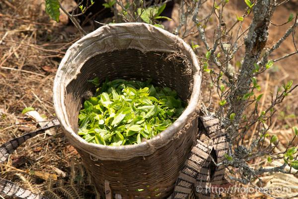 自然栽培茶