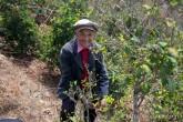 雲南省北西部の茶摘み