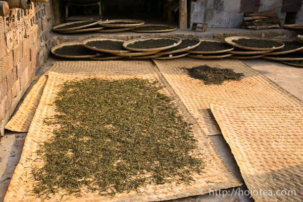 天日乾燥中のプーアル茶