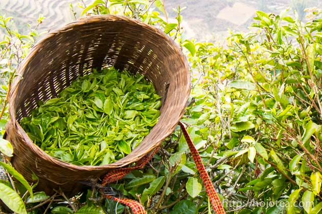 自然栽培の茶葉