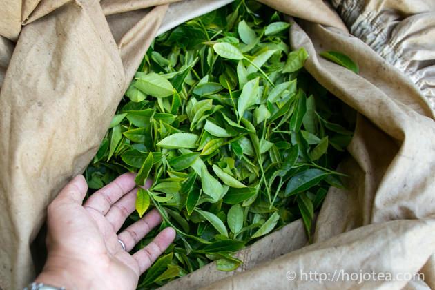 月ヶ瀬の茶葉