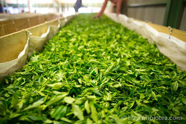 緑茶の種類を製法と品種により徹底解説