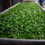 月ヶ瀬緑茶