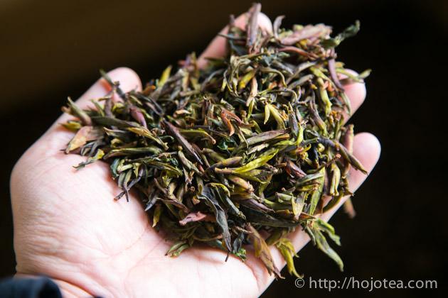雲南省で野生春芽の仕入