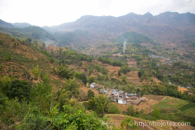 雲南省の古樹から作られた馬鞍山古樹白茶