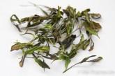 白茶の作り方